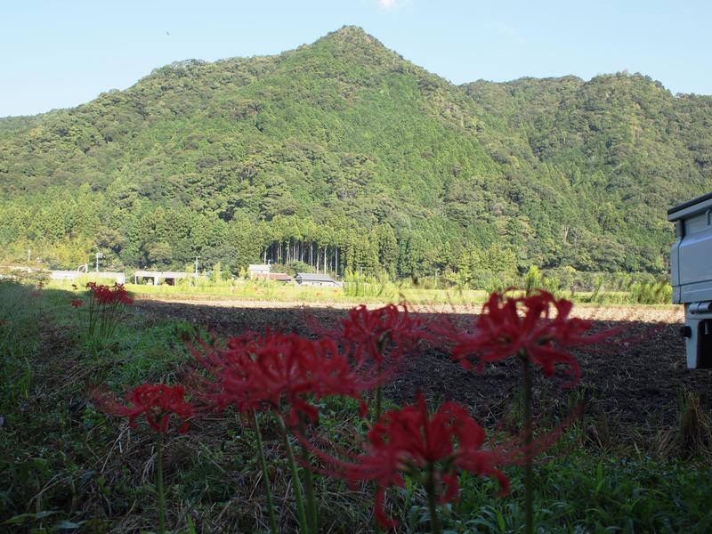 岡崎市額田の山と花